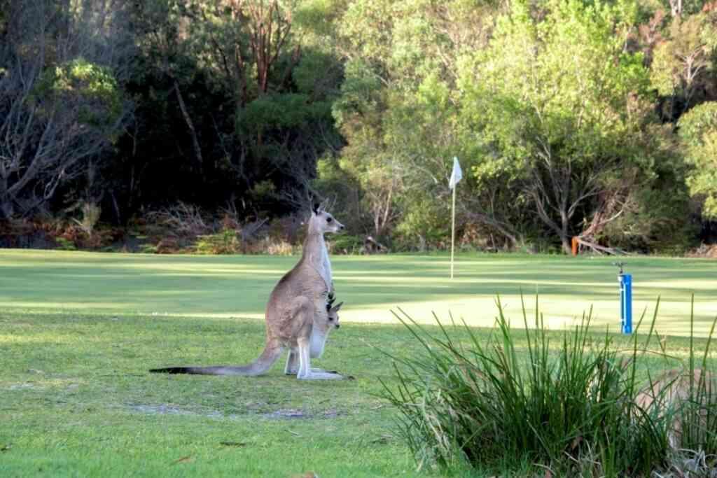 Kangas At The Golf Club