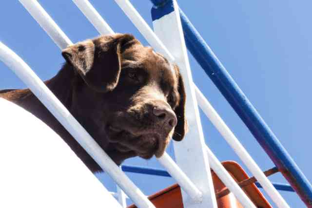 Dog On Boat From Vink